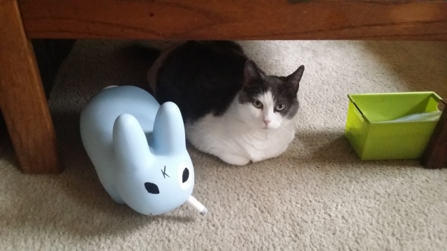 Cat and the labbit